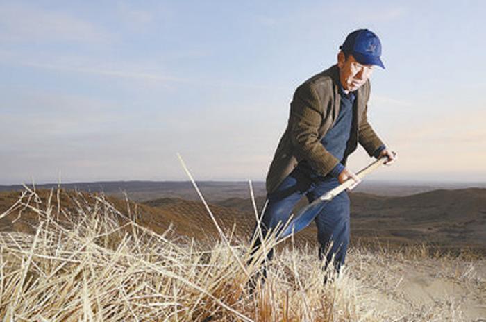 治理沙漠 多苦都值