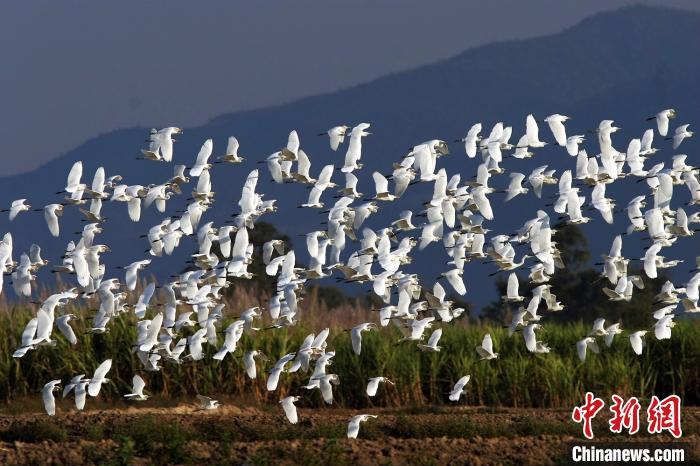 云南全面加强鸟类保护管理 禁止随意投食补饲候鸟