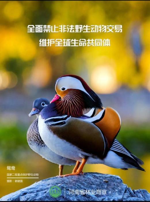 """第7个世界野生动植物日 林业部门倡议拒绝野生动物当""""盘中餐""""和""""商品"""""""