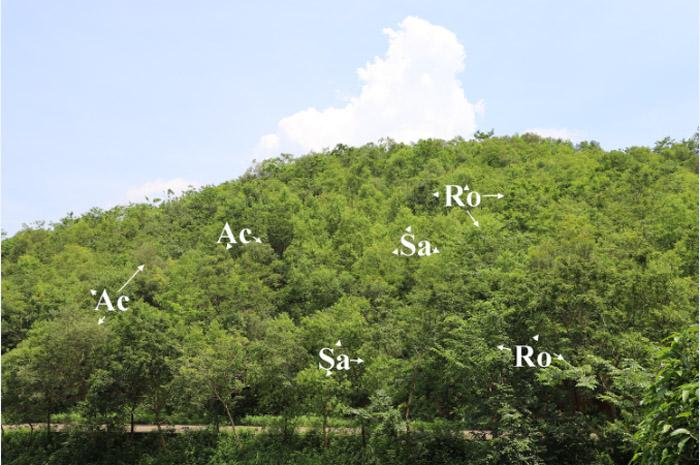 """中国林科院""""十三五""""国家自然科学基金项目优秀成果汇编报道20"""