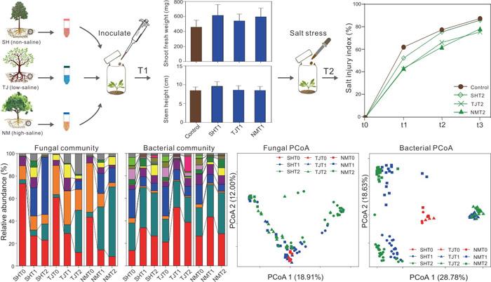 中国林科院亚林所科研人员揭示天然微生物群落调控杨树生长和耐盐的土壤背景依赖性特征