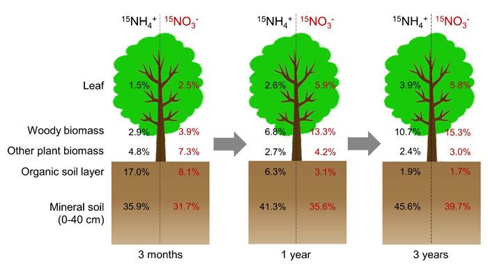 中国林科院热林所尖峰岭生态站热带山地森林大气沉降氮去向和再分配研究取得新突破