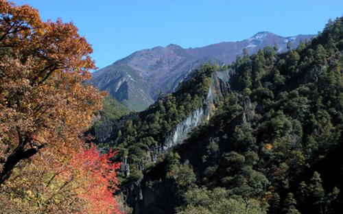 庆大沟森林公园